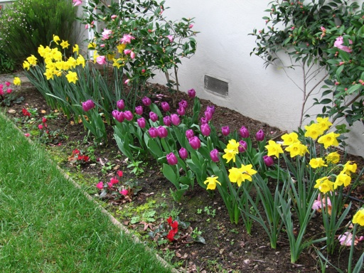 These Pictures Show Some Of The Spring Bulbs That Have Been Blooming In Our Garden  In The Past Few Weeks. The Hyacinths In The Top Picture Were Stunning At ...